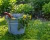 Co na plevel v trávníku, jak ho vyhubit bez chemie a kdy sáhnout po postřiku?