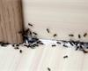 Jak na mravence v domě i na zahradě: Vsaďte na osvědčené babské rady