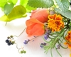 Bylinky a rostliny, které odpuzují komáry: Funguje levandule, vratič i afrikán