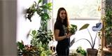 Jak zajímavě pěstovat pokojovky v interiéru? Inspirujte se!