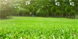 Mech v trávníku: Jak jej vymýtit