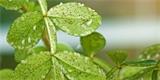 Co na molice ve skleníku a v zahradě, jak tyto škůdce poznat?