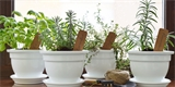 I v zimě můžete pěstovat bylinky