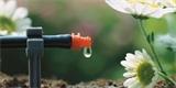 Kapkové zavlažování: Šetří čas, peníze a funguje i proti plevelu
