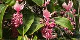 Kvetoucí pokojovky: Velká fotogalerie těch nejkrásnějších