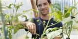 Jak zaštipovat rajčata? Jednoduchý návod pro začátečníky