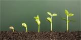 Předpěstujte si rajčata, papriky a okurky. Ušetříte a budete mít silné sazenice