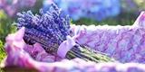 Nádherné dekorace z levandule, které ozdobí i provoní váš domov. Inspirujte se