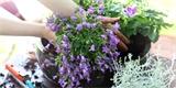Jak si v srpnu osázet venkovní truhlíky, když nechcete utrácet za rostliny