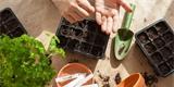 Jak předpěstovat zeleninu? Rady, postupy a tipy na pomůcky, které vám usnadní práci
