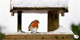 Ptačí krmítko pověste v říjnu. Jaké vybrat a čím ptáky nasytit?