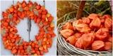 Nasbírejte si bodláky, mochyni či měsíčnici a vyrobte si krásné podzimní dekorace. Jak na to?
