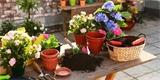 Jak vybrat truhlíky a květináče