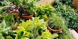 Zahrádka na balkoně: Zelenina v truhlíku, na zemi i ve vzduchu