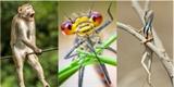 Vtipné fotky zvířat, které vás dostanou: Hmyzí ufo, ještěrka modelka i naražený opičák