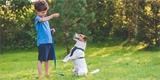Jak doma vychovat psa k poslušnosti a naučit ho i pár triků