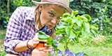 Mšice útočí, braňte své rostliny. Pomůžou berušky, ocet či mléko