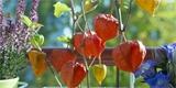 Co dát do truhlíku na podzim? Inspirace pro podzimní balkón