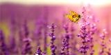 5 bylin, které budou chutnat vám i motýlům