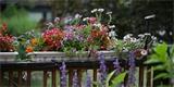 15 nejhezčích balkonových rostlin do truhlíku. Inspirujte se!