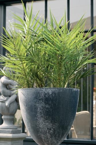 rostliny_1.jpg