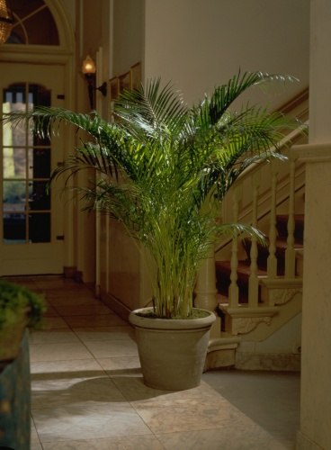 rostliny_4.jpg