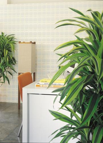rostliny_6.jpg