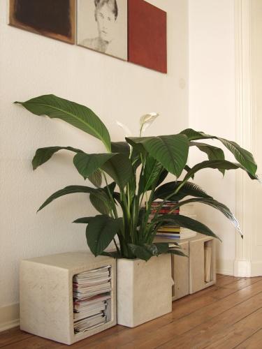 rostliny_8.jpg
