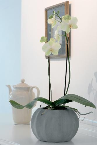 rostliny_10.jpg