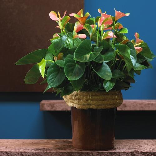 rostliny_11.jpg