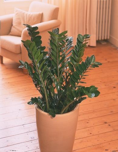 rostliny_16.jpg
