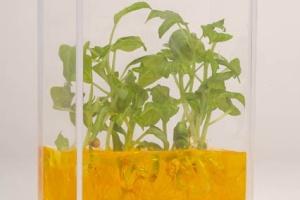 plantarium 3.jpg