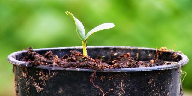 Pět rad, které vám zajistí úspěšné předpěstování rostlin
