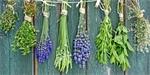 Užitková zahrada | Bylinky | Ochrana a péče | Úroda | Užitečná zahrada