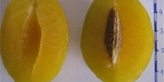 Špendlíky: Polozapomenuté ovoce