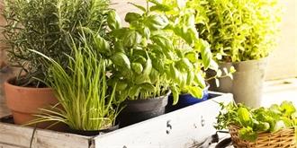 Pusťte se do výsevu bylinek, je ideální čas