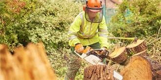Kácení stromů na zahradě: Bez znalosti zákona se neobejdete