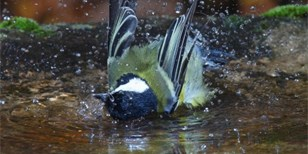 Půvabné ptačí pítko do zahrady i na balkon vytvoříte snadno a levně