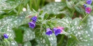 Jarní bylinky a plevel už pomalu raší. Nasbírejte si je a načerpejte sílu z přírody
