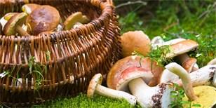 Kam na houby: Víme, kde rostou! Podívejte se na tipy z celé ČR