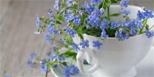 Pomněnky už nejsou jen modré, těšit vás mohou i růžové a bílé. Jak je pěstovat?