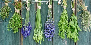 Jak zazimovat bylinky
