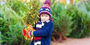 Vánoční stromek v květináči: Je lepší smrk, borovice, nebo jedle?