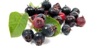 Vypěstujte si chutné a zdravé plody muchovníku